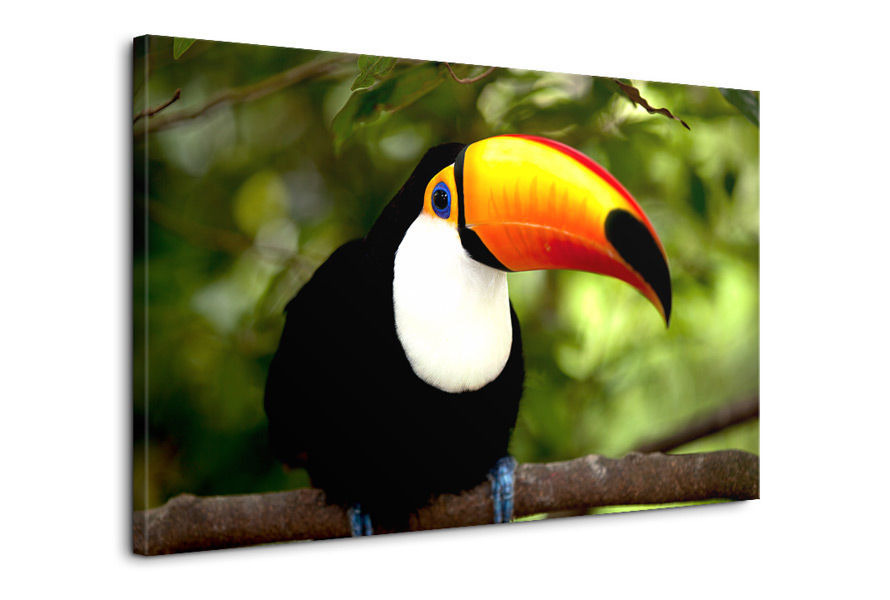 Obraz najväčšieho vtáka