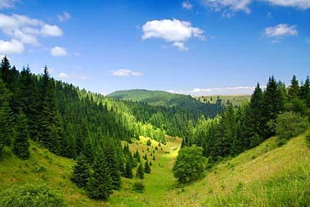 Fototapeta slovenské lesy 10120