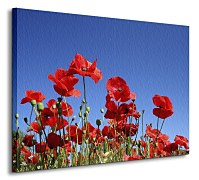 Obraz Meadow of poppies CS0154