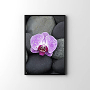 Plagát Spa orchid with zen stones zv6856