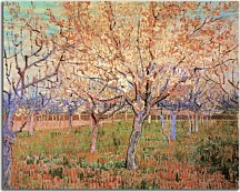 Orchard with Blossoming Apricot Trees zs18425